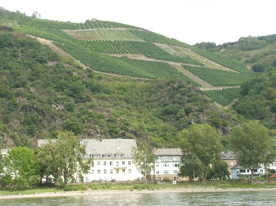 Vineyards on the hills as seen from the Rhine cruise, Germany