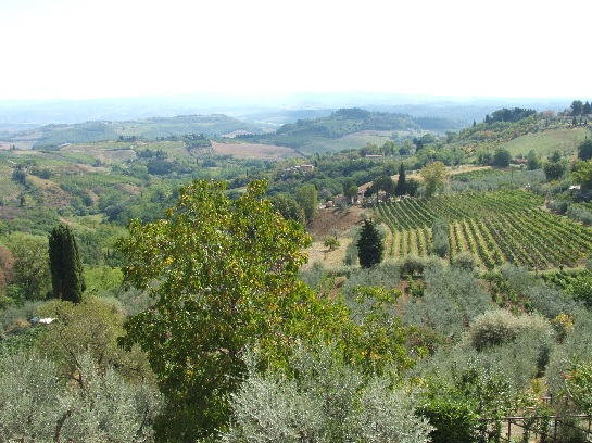 Tuscan Vineyards, Tuscany, Italy
