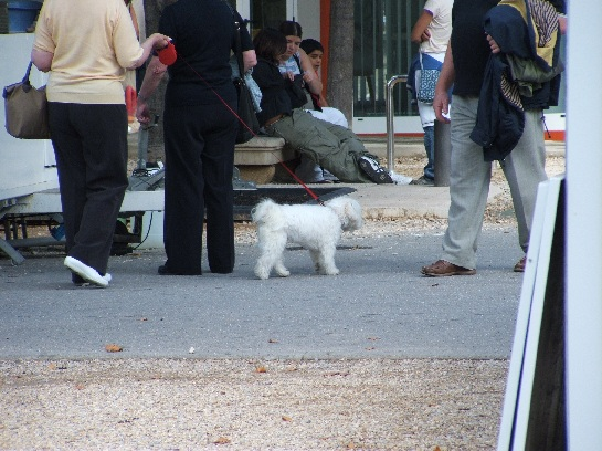 French dog in Nimes, France