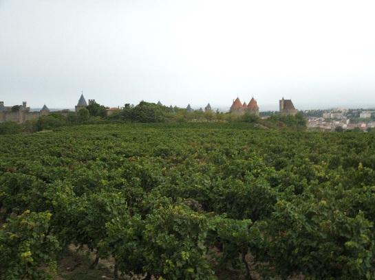 Carcassonne castle over grapevines, Carcassonne, France