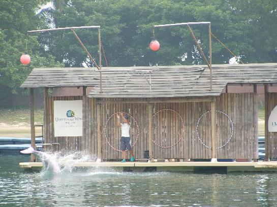 Albino Dolphin show on Sentosa Island, Singapore