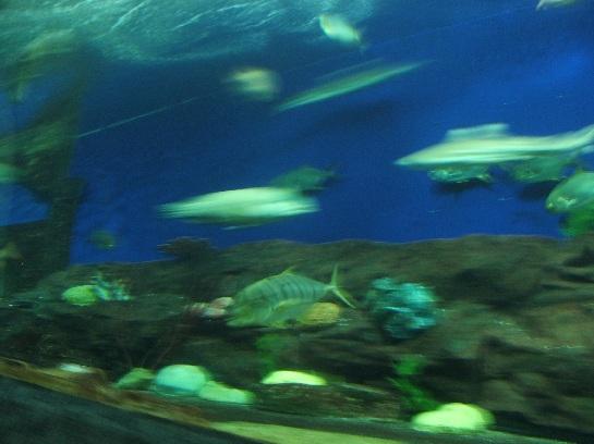 Sentosa Island Aquarium, Sentosa Island, Singapore